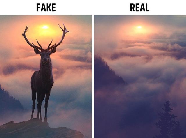 8 sự thật bất ngờ đằng sau những tấm hình từng được cộng đồng mạng chia sẻ dữ dội - Ảnh 1.