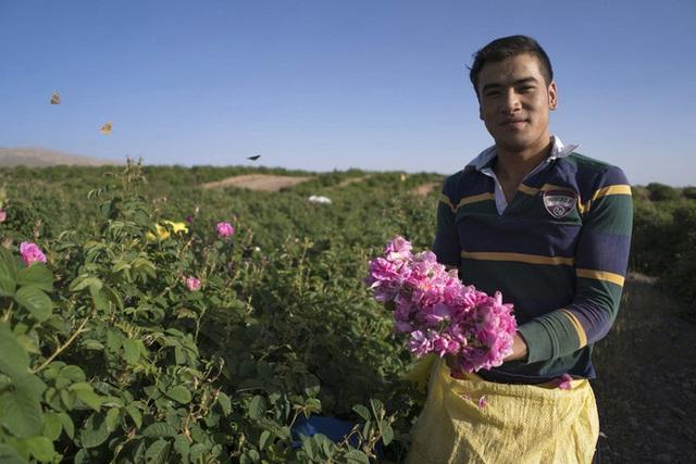 Câu chuyện về những bông hồng thơm nhất thế giới của Iran: Cả một thị trấn toàn hoa hồng, người dân làm một tháng là đủ tiền tiêu cả năm không hết - Ảnh 6.