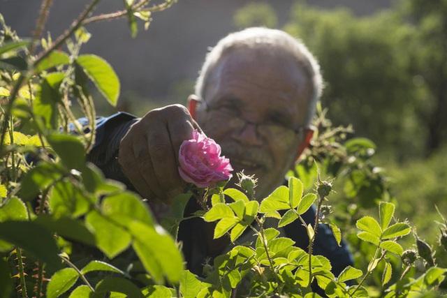 Câu chuyện về những bông hồng thơm nhất thế giới của Iran: Cả một thị trấn toàn hoa hồng, người dân làm một tháng là đủ tiền tiêu cả năm không hết - Ảnh 9.
