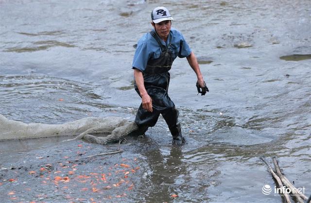 Làng nuôi cá chép đỏ tất bật trước ngày cúng ông Công ông Táo - Ảnh 2.
