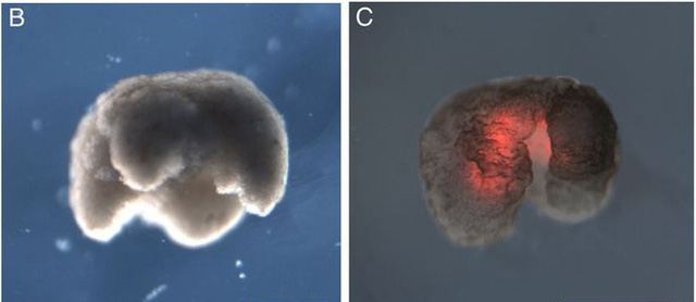 Đột phá: Các nhà khoa học vừa tạo ra một dạng sống hoàn toàn mới trên Trái Đất - Ảnh 3.