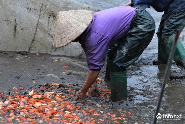 Làng nuôi cá chép đỏ tất bật trước ngày cúng ông Công ông Táo - Ảnh 3.