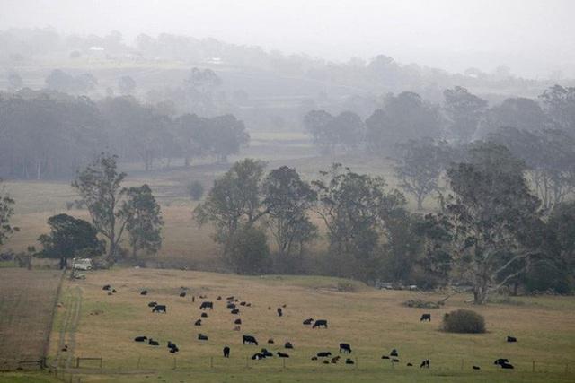 Cháy rừng Úc: Khói lan ra toàn cầu, gây hiện tượng thời tiết lạ - Ảnh 2.