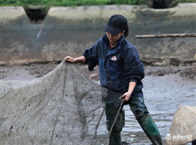 Làng nuôi cá chép đỏ tất bật trước ngày cúng ông Công ông Táo - Ảnh 4.