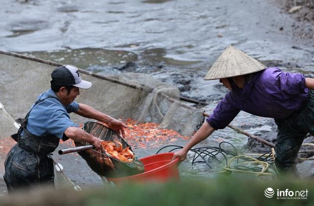 Làng nuôi cá chép đỏ tất bật trước ngày cúng ông Công ông Táo - Ảnh 6.