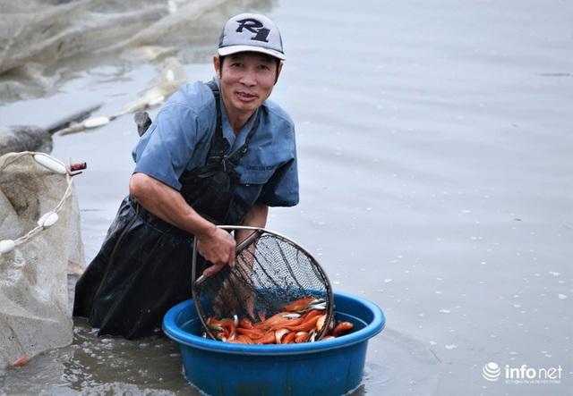 Làng nuôi cá chép đỏ tất bật trước ngày cúng ông Công ông Táo - Ảnh 9.