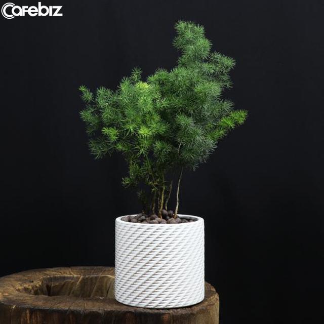Đón năm mới phát tài, 6 loại cây nhất định phải có ở nơi làm việc, vừa thanh lọc không khí, vừa đem lại vận may - Ảnh 6.