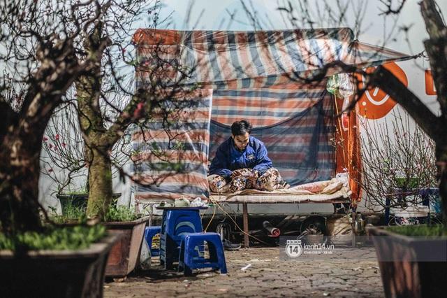 Những người nông dân chong lều canh đào, quất giữa cái lạnh 14 độ C của Hà Nội: Như đánh một canh bạc, bại nhiều hơn thắng - Ảnh 2.