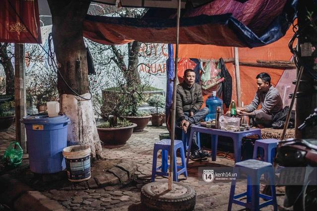 Những người nông dân chong lều canh đào, quất giữa cái lạnh 14 độ C của Hà Nội: Như đánh một canh bạc, bại nhiều hơn thắng - Ảnh 8.