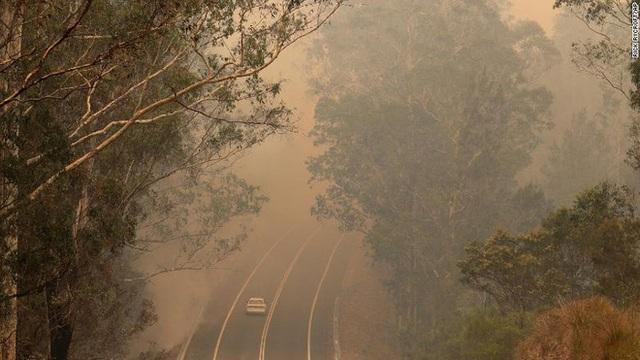 Gần NỬA TỈ sinh vật bị thiêu rụi, 1/3 số gấu koala chết cháy: Úc đang trải qua trận cháy rừng đại thảm họa thực sự mà chưa nhìn thấy lối thoát - Ảnh 2.