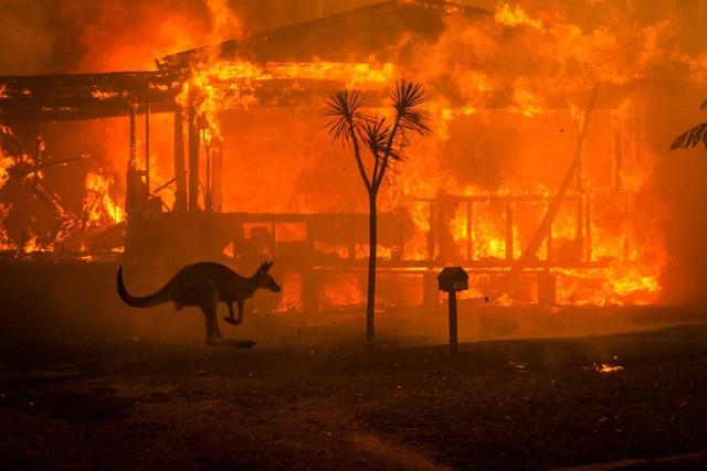Biến đổi khí hậu: Nguyên nhân sâu xa khiến nước Úc chìm trong biển lửa? - Ảnh 1.