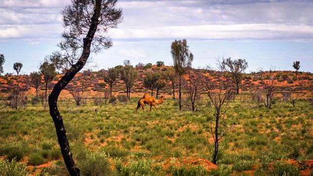 Nền du lịch Úc thiệt hại nặng nề vì thảm hoạ cháy rừng, loạt ảnh Before/After càng khiến cả thế giới xót xa hơn - Ảnh 10.