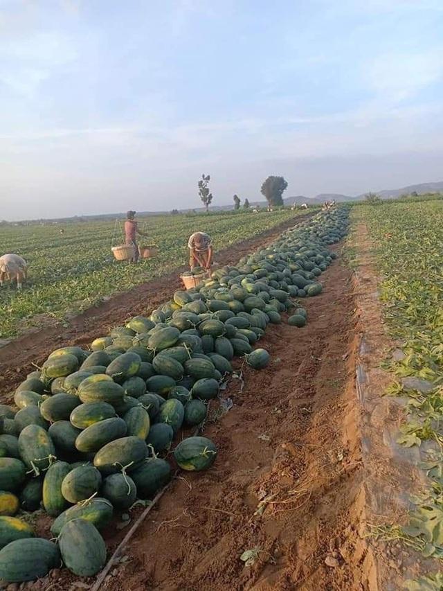 Muôn kiểu hỗ trợ nông dân trong mùa đại dịch Corona của doanh nghiệp và người dân miền Nam: Ngoài mua lại rồi phát miễn phí hoặc bán với giá vốn, còn giúp nông dân kết nối các nguồn lực để họ tự thân vận động - Ảnh 11.