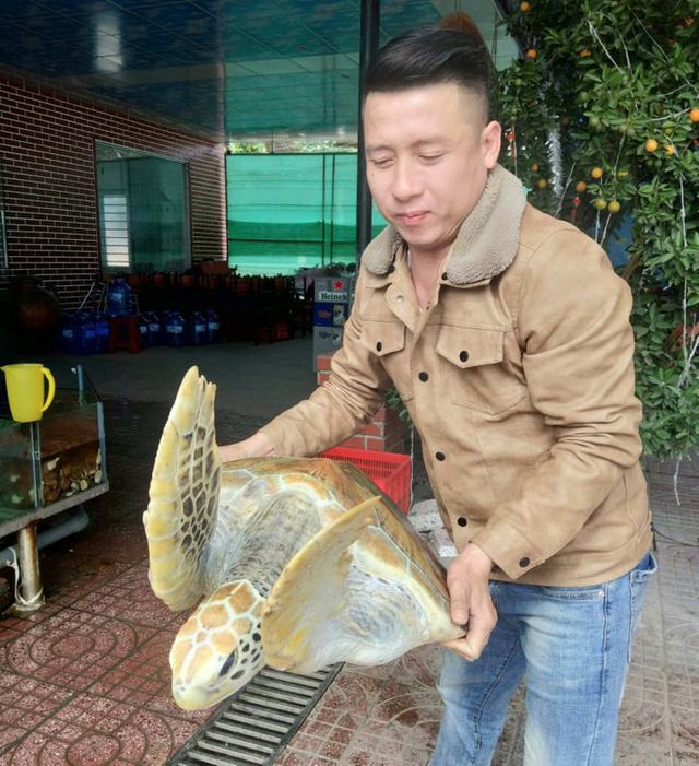 Chủ nhà hàng mua rùa biển quý hiếm nặng 30 kg để thả về biển - Ảnh 2.