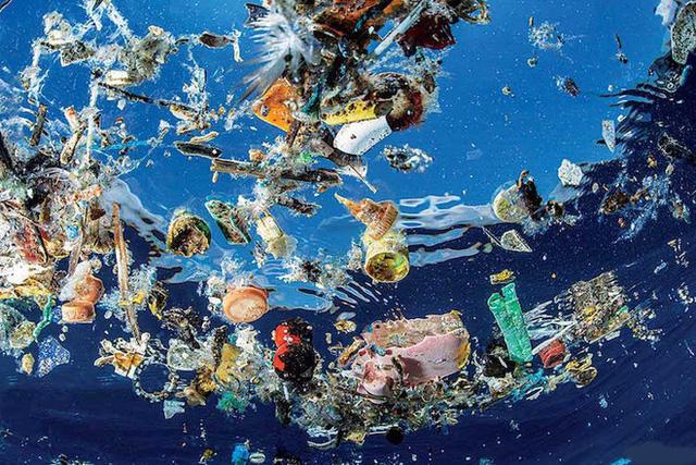 Một con rùa xanh quý hiếm phải uống thuốc xổ cả tháng trời mới thải hết rác nhựa trong bụng ra ngoài - Ảnh 1.