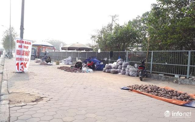 Khoai lang Nhật giải cứu đầy vỉa hè Hà Nội, thương nhân bán giá 13.000 đồng/kg - Ảnh 2.