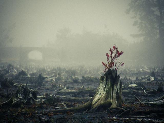 19 bức ảnh khẳng định cỏ cây có sức sống mãnh liệt bất chấp nghịch cảnh - Ảnh 24.