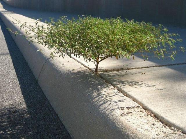 19 bức ảnh khẳng định cỏ cây có sức sống mãnh liệt bất chấp nghịch cảnh - Ảnh 26.