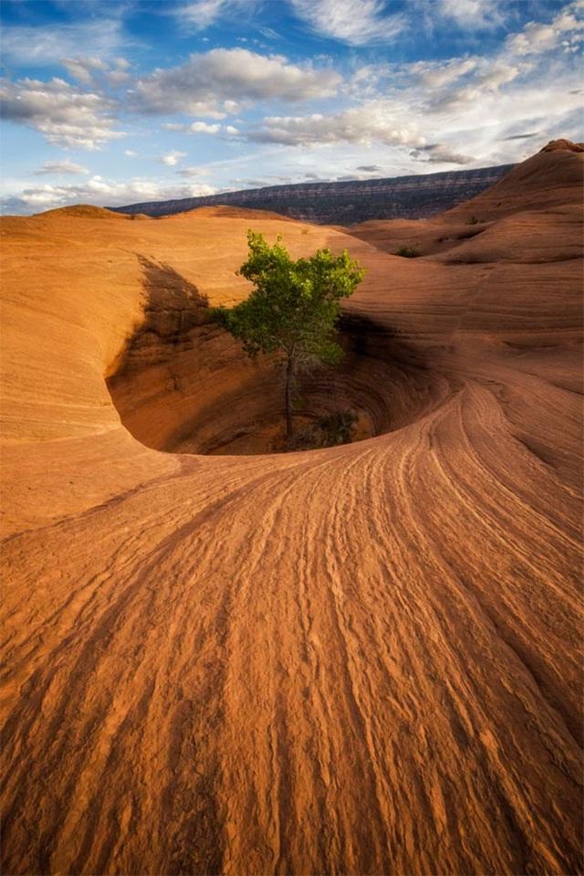 19 bức ảnh khẳng định cỏ cây có sức sống mãnh liệt bất chấp nghịch cảnh - Ảnh 32.