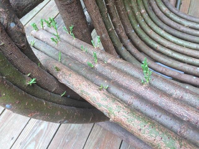 19 bức ảnh khẳng định cỏ cây có sức sống mãnh liệt bất chấp nghịch cảnh - Ảnh 34.