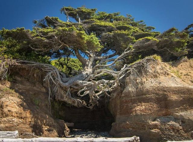 19 bức ảnh khẳng định cỏ cây có sức sống mãnh liệt bất chấp nghịch cảnh - Ảnh 8.