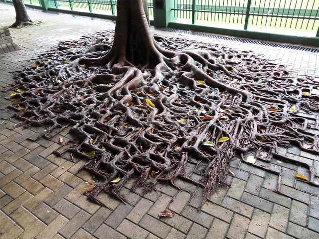 19 bức ảnh khẳng định cỏ cây có sức sống mãnh liệt bất chấp nghịch cảnh - Ảnh 10.