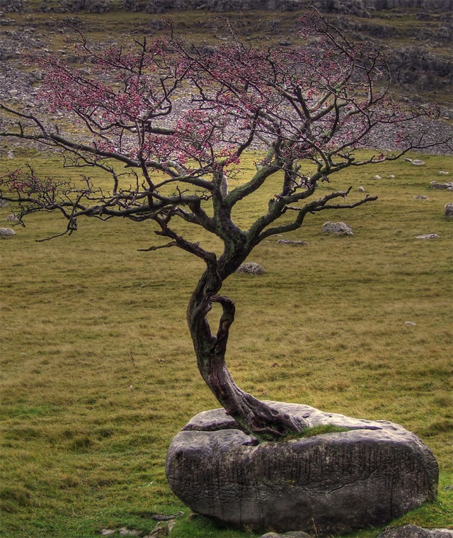 19 bức ảnh khẳng định cỏ cây có sức sống mãnh liệt bất chấp nghịch cảnh - Ảnh 12.