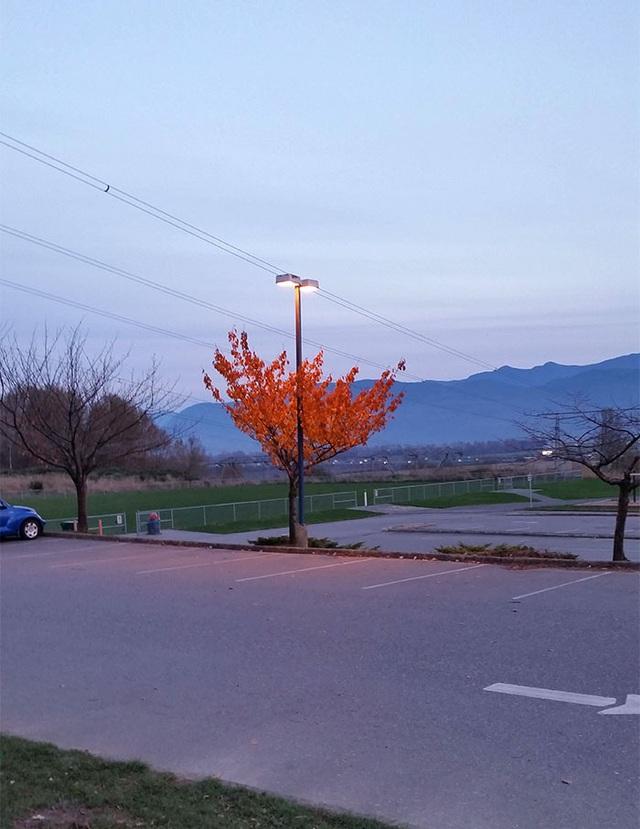 19 bức ảnh khẳng định cỏ cây có sức sống mãnh liệt bất chấp nghịch cảnh - Ảnh 16.