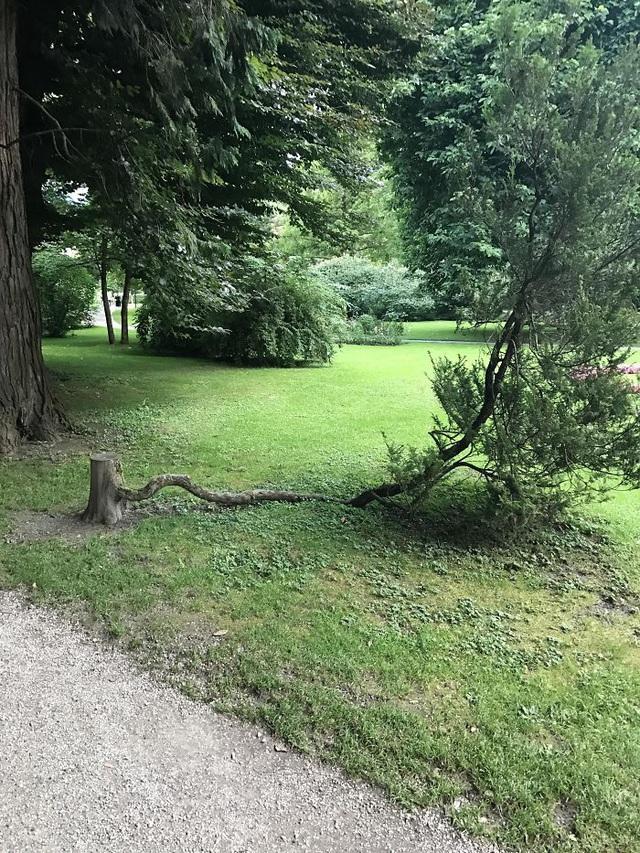 19 bức ảnh khẳng định cỏ cây có sức sống mãnh liệt bất chấp nghịch cảnh - Ảnh 18.