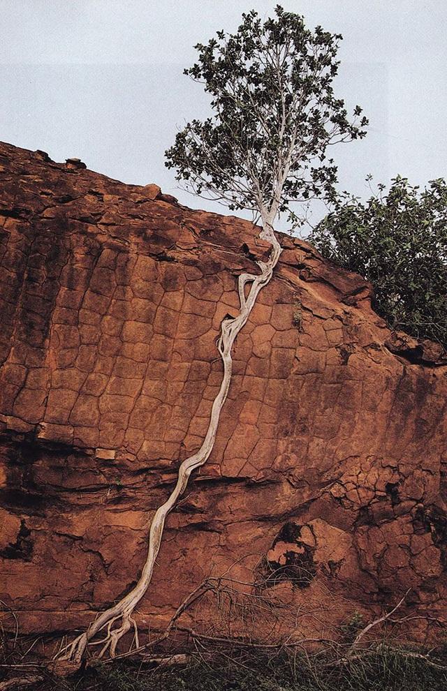 19 bức ảnh khẳng định cỏ cây có sức sống mãnh liệt bất chấp nghịch cảnh - Ảnh 20.