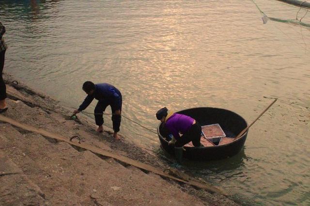 Ngư dân Hà Tĩnh hốt lộc trời đầu năm, kiếm tiền triệu sau vài giờ ra khơi - Ảnh 3.
