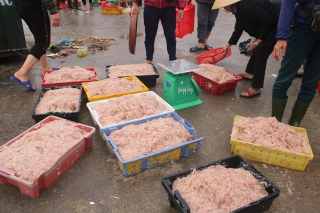 Ngư dân Hà Tĩnh hốt lộc trời đầu năm, kiếm tiền triệu sau vài giờ ra khơi - Ảnh 9.