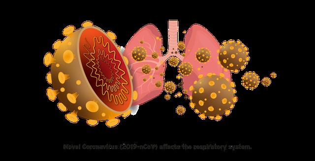Đi tìm lời giải cho độc tính của virus corona: Khi nào chúng gây chết người, khi nào chỉ gây cúm? - Ảnh 3.