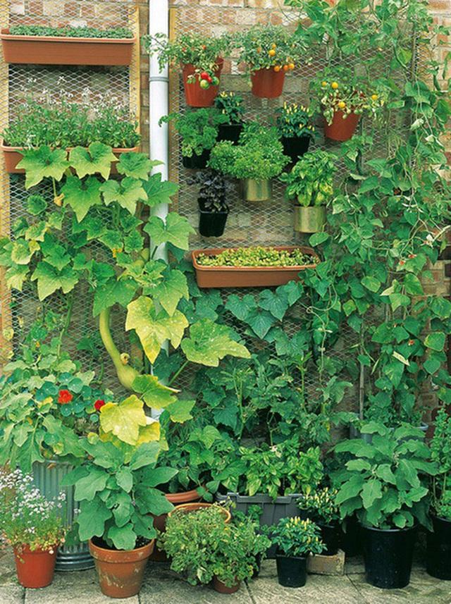 15 vườn rau tự tạo từ những ý tưởng độc đáo không ngờ - Ảnh 11.