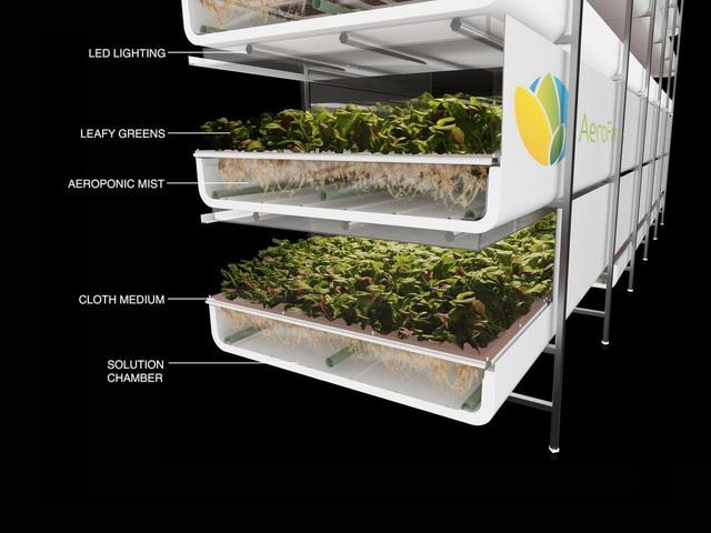 Nông nghiệp trong tương lai: Không cần đến đất và mặt trời, tiết kiệm 95% nước, 40% phân bón và không sử dụng thuốc trừ sâu - Ảnh 1.