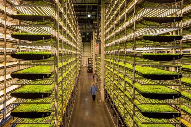 Nông nghiệp trong tương lai: Không cần đến đất và mặt trời, tiết kiệm 95% nước, 40% phân bón và không sử dụng thuốc trừ sâu - Ảnh 2.