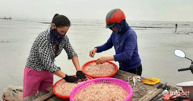 Trúng đậm mùa ruốc biển, ngư dân xứ Nghệ kiếm tiền triệu mỗi ngày - Ảnh 10.