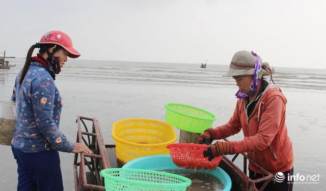 Trúng đậm mùa ruốc biển, ngư dân xứ Nghệ kiếm tiền triệu mỗi ngày - Ảnh 3.