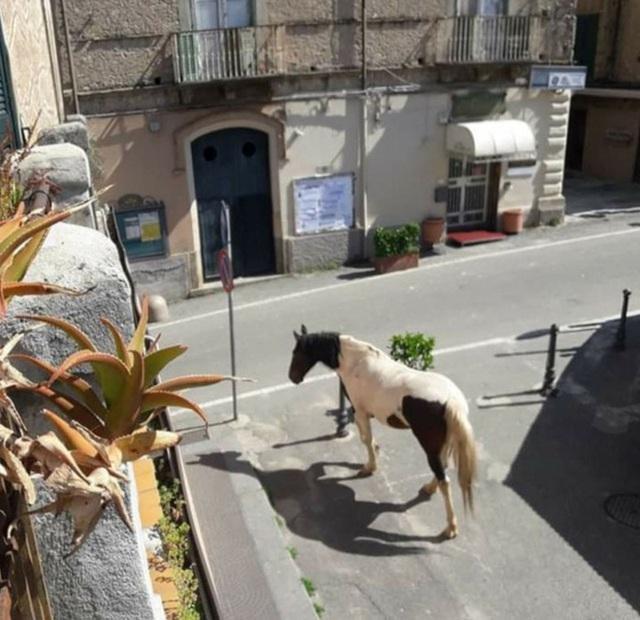 Con người cách ly trong nhà trốn dịch, động vật hoang dã bỗng chiếm dụng đường phố - Ảnh 9.
