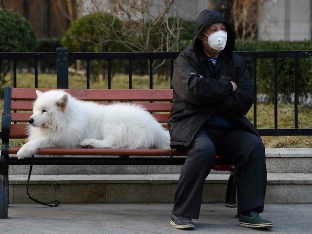 Chuyên gia khẳng định thú cưng không thể nhiễm Covid-19, vậy lý do một chú chó ở Hồng Kông dương tính với virus là gì? - Ảnh 1.
