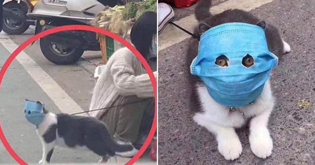 Chuyên gia khẳng định thú cưng không thể nhiễm Covid-19, vậy lý do một chú chó ở Hồng Kông dương tính với virus là gì? - Ảnh 3.