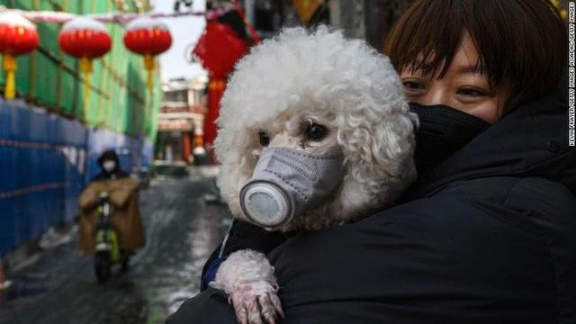 Chuyên gia khẳng định thú cưng không thể nhiễm Covid-19, vậy lý do một chú chó ở Hồng Kông dương tính với virus là gì? - Ảnh 4.