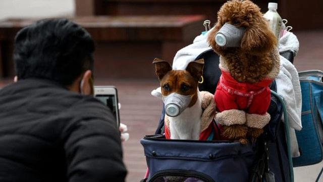 Chuyên gia khẳng định thú cưng không thể nhiễm Covid-19, vậy lý do một chú chó ở Hồng Kông dương tính với virus là gì? - Ảnh 5.
