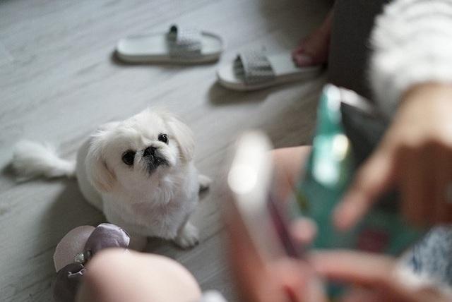 Chuyên gia khẳng định thú cưng không thể nhiễm Covid-19, vậy lý do một chú chó ở Hồng Kông dương tính với virus là gì? - Ảnh 6.