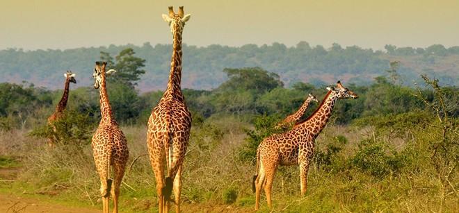 rwanda - akagera national park rwanda 1562637864733339755174 - Bí mật của thành phố sạch nhất châu Phi: Cấm đồ nhựa, tháng nào cũng tổ chức ngày 'toàn dân dọn dẹp'