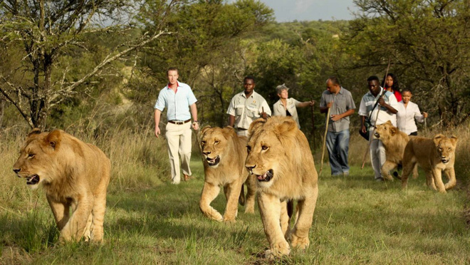 rwanda - lions 1562637906012506935777 - Bí mật của thành phố sạch nhất châu Phi: Cấm đồ nhựa, tháng nào cũng tổ chức ngày 'toàn dân dọn dẹp'