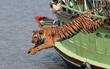 Làng có 3.000 phụ nữ có chồng bị hổ giết ở Ấn Độ: Vì sao nghe rừng có