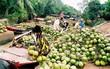 Lần đầu tiên các DN trong hệ sinh thái TMĐT Việt nam quyết bắt tay đưa dừa Bến Tre