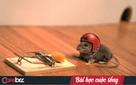 Câu chuyện chiếc bẫy chuột và lời khuyên đừng ngó lơ những người đang gặp khó khăn