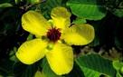 Vẻ đẹp và ý nghĩa Quốc hoa của các nước ASEAN